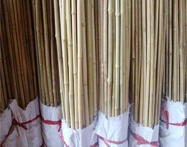 Garden Bamboo Stakes Supplier